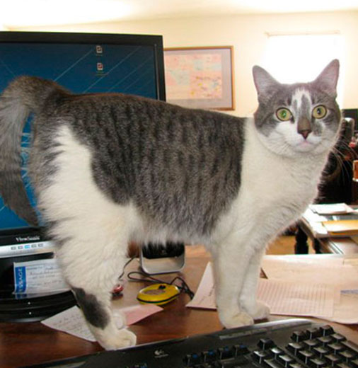 KB-Energys-office-cat-at-work-thumb.jpg