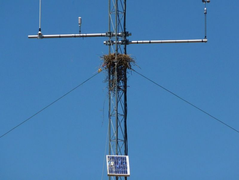 Don't turn your tower into a bird's nest.